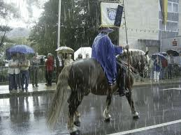 horse in parade