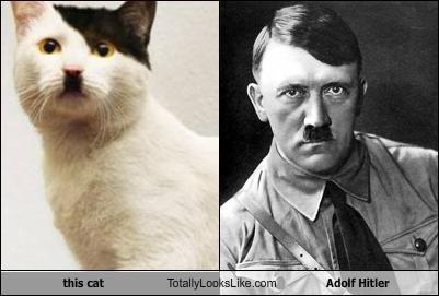 NAVER まとめこれはカワイイ!まるでスターリンなヒゲ猫