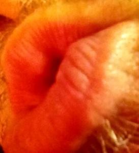 man's lips