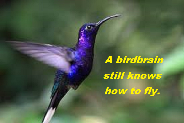 hummingbird with words