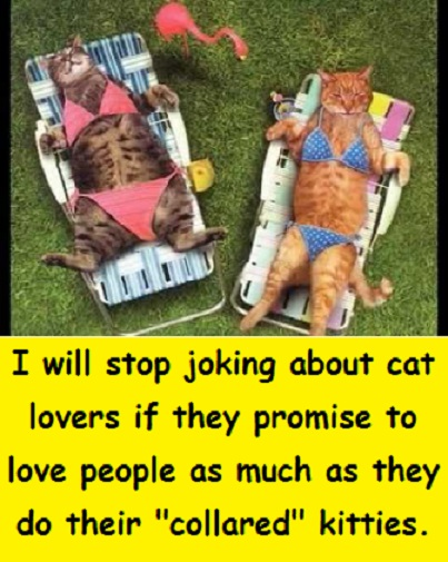 cats in bikinis with words