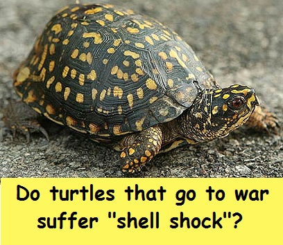turtle shell with words