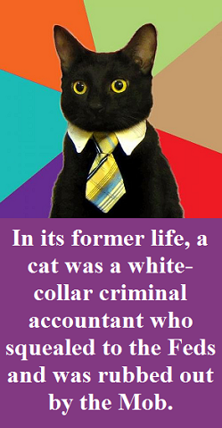 cat in a business suit with words
