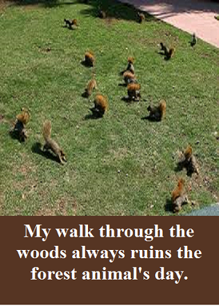 squirrel stampede with words