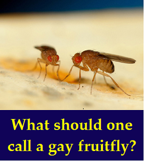 gay fruitfly with words