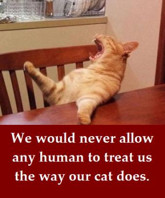 brat cat with words