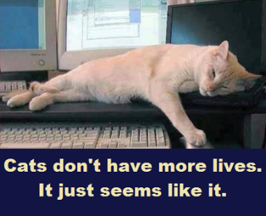 lazy cat with words