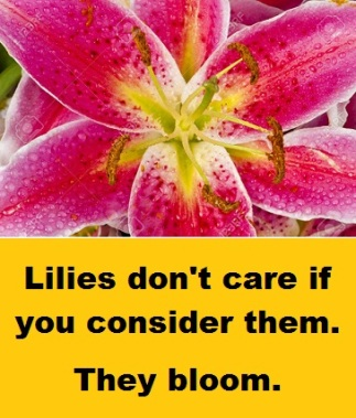 lily closeup with words 2