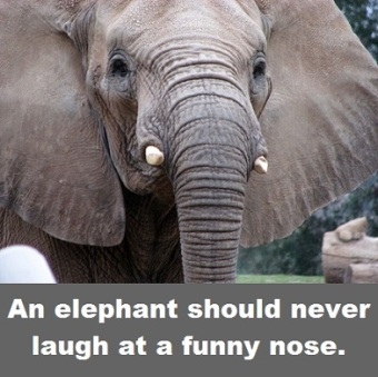 elephant face with words