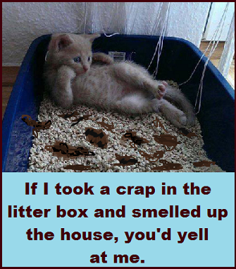 litter-box-with-words