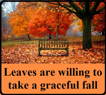beautiful-leaves-with-words
