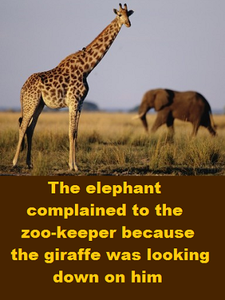 elephant-and-giraffe-with-words