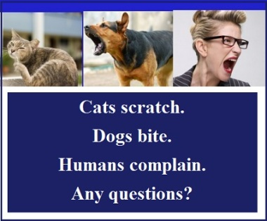 cat-dog-human-with-words