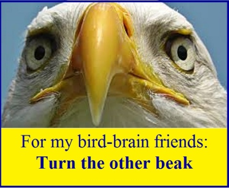 eagle beak